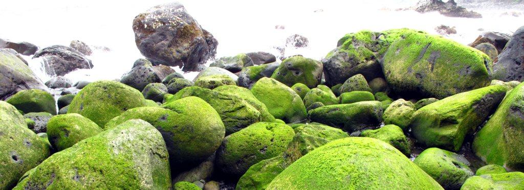Bemooste Steine am Strand